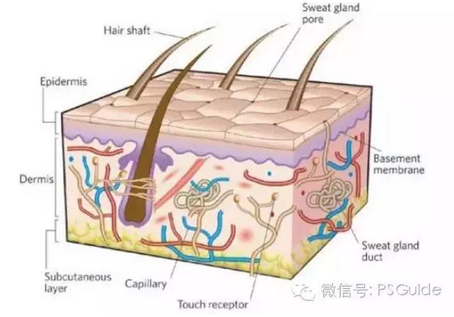 新品上线 >正文   (图1:皮肤结构图) 痤疮疤痕生成主要原因: 1,青春期